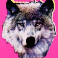 AID06-Aida-Wolf-Pink-Thumbnail