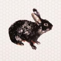 CHB02-Charming-Baker-Black-Rabbit-White-Background-Close-Thumbnails
