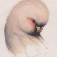 MSV12-Miss-Van-Lady-Bird-Thumbnail