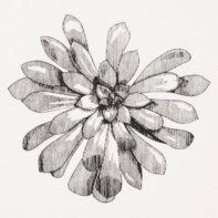 PHL08-Phil-Mcneill-Aeonium-Schwarzkopf-Thumbnail
