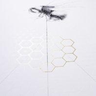 ALB02-Jessica-Albarn-Balancing-Bee-Honey-Thumbnail
