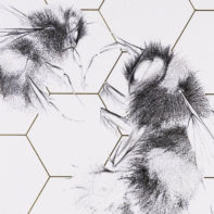ALB26-Queen-Bee-And-Worker-Honey-Thumbnail