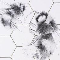 ALB27-Queen-Bee-And-Worker-Wild-Honey-Thumbnail