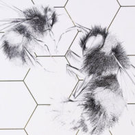 ALB27-Queen-Bee-And-Worker-Wild-Honey-Thumbnail