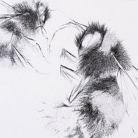 ALB28-Queen-Bee-And-Worker-Clear-Thumbnail