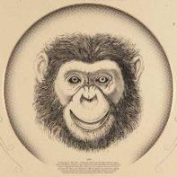 IAN03-Ian-Mcdonnell-Monkey-Straw-Thumbnail