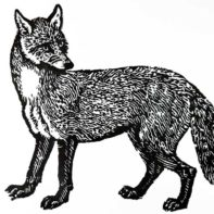 PT08-Patrick-Thomas-Bewicks-Fox-Black-Thumbnail