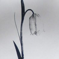 temp_thumbnail-TRACY_KENDALL_floral_7