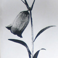 temp_thumbnail-TRACY_KENDALL_floral_8