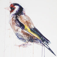 Dave-White-Goldfinch-Temp-Thumbnail