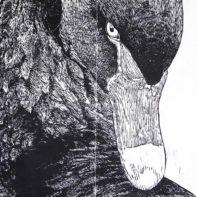 GAI25-Gaia-Black-Swan-Thumbnail