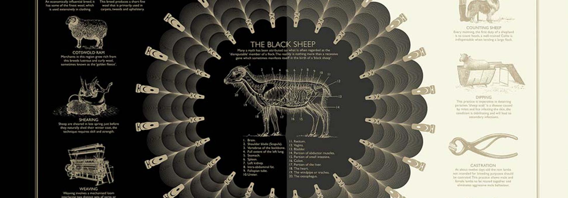 blacksheep_artical_banner