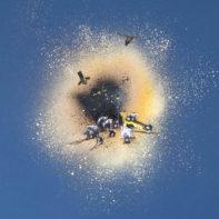 PAB53A-Pablo-Delgado-Satelite-Lantern-Scene-With-Bears-On-Blue-Thumbnail
