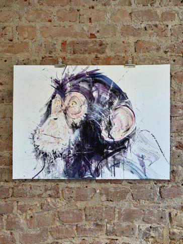 Chimp III Standard