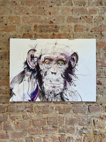 Chimp I Standard