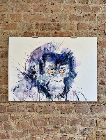 Baby Gorilla - Standard