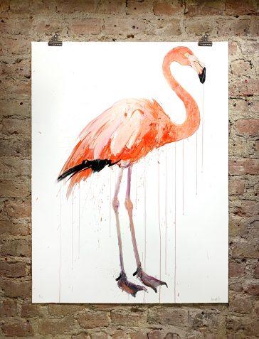 Flamingo II - 2019 [Standard]