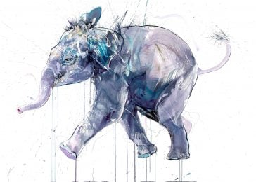 Young Elephant I - standard