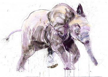 Young Elephant II - Standard