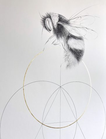 The Bee And The Golden Circle